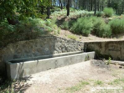 Pinares de Piedralaves;nacimiento del jucar rutas y senderismo ruta de senderismo
